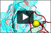 Watch a video predicting  protein-protein interactions